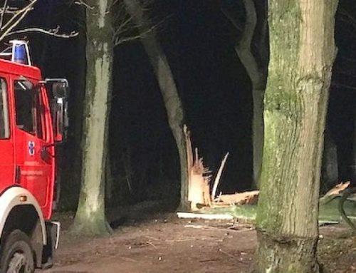Baumfällung nach dem Sturm: Hans-Böckler-Straße wieder frei