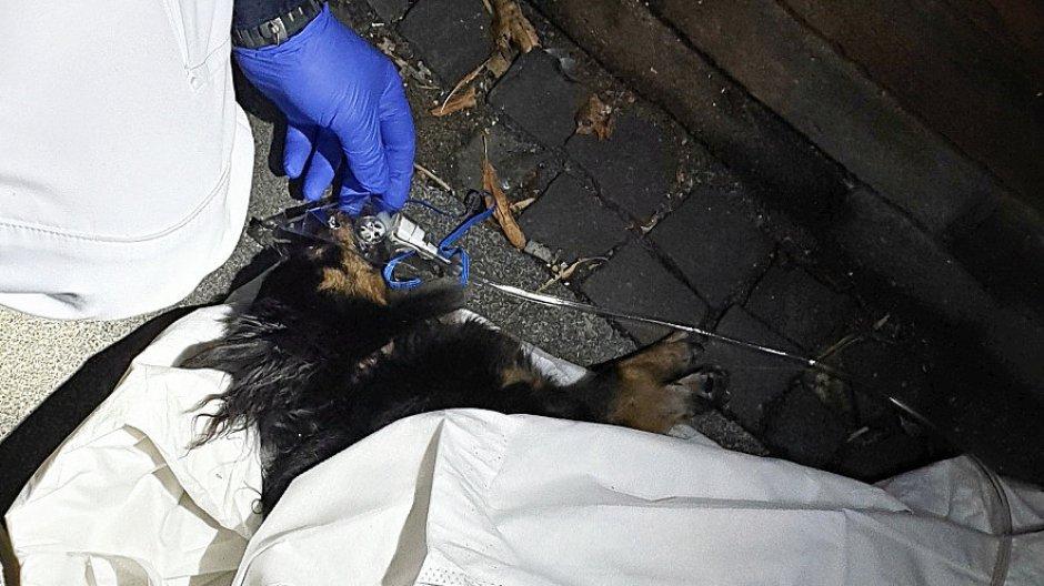Feuerwehr rettet Hund aus einer brennenden Wohnung